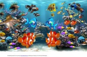 Vertelplaat 'Mooiste vis van de zee'