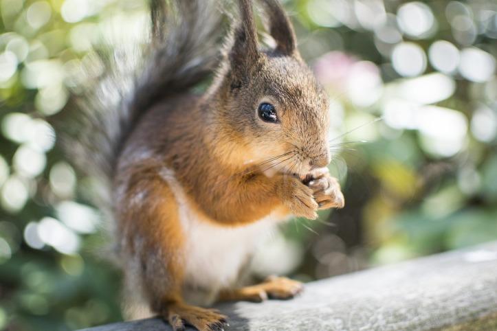 squirrel-2371509_1920